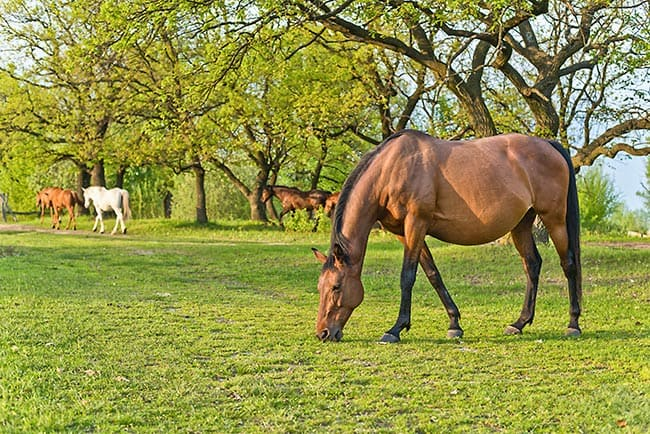 Changing Trends in Equine Reproduction – The Horse