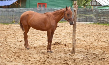 Training and Care: How to Improve Our Horses' Welfare