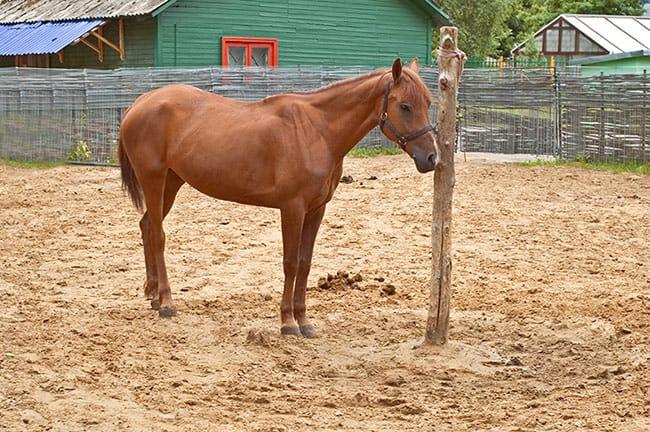 Treinamento de cavalo traumático
