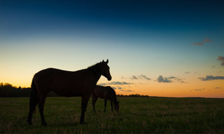 Is Turning Out Horses at Night OK During the Summer?