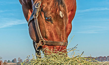 Commentary: Expect Hay Prices to Remain High