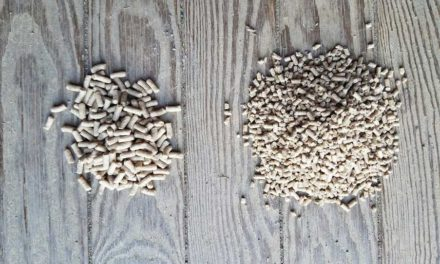 Pelleted vs. Extruded Feeds: Digestibility and Metabolic Response in Horses