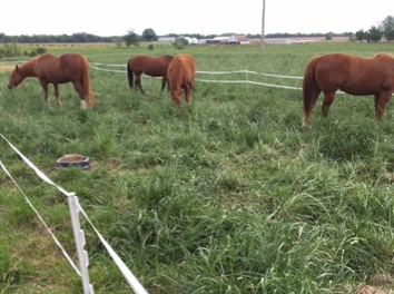 Reduced Pasture Size Can Help Your Horse Lose Weight