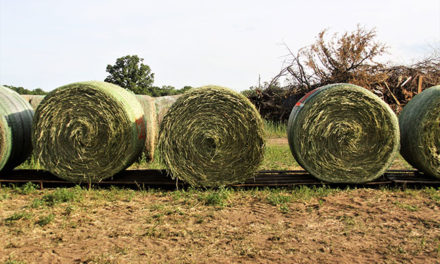 Types of Alfalfa Bale Wrap Compared