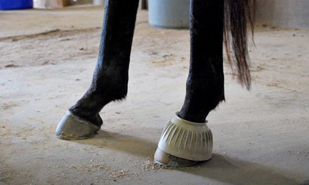 Crooked Horse Under Saddle? A Single Bell Boot Can Help