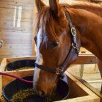 Feeding the Horse That Won't Eat