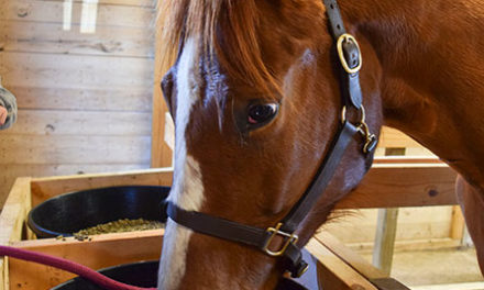 Picky Eater? Add Anise Flavoring to Your Horse's Feed