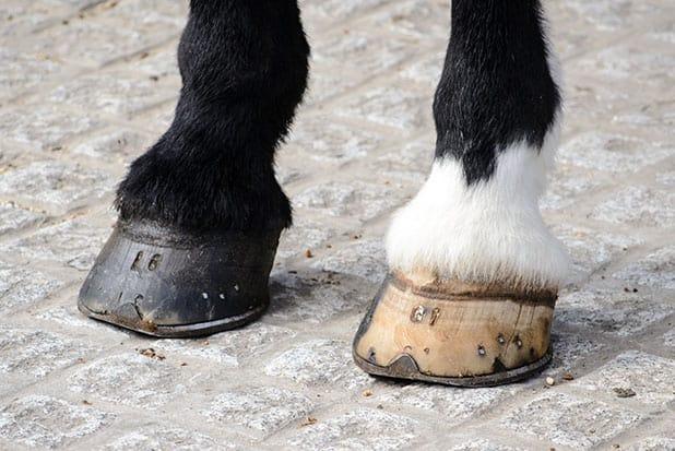 Are White Hooves Weaker Than Dark Ones?