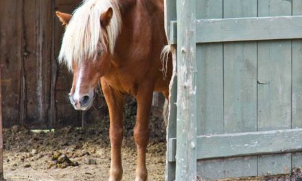 Inside Information: 10 Signs of Internal Illness in Horses