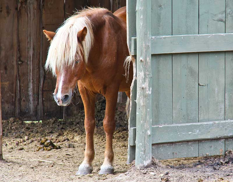 10 Signs of Internal Illness in Horses
