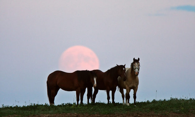 Does the Moon Phase Affect Horses' Colic Risk?