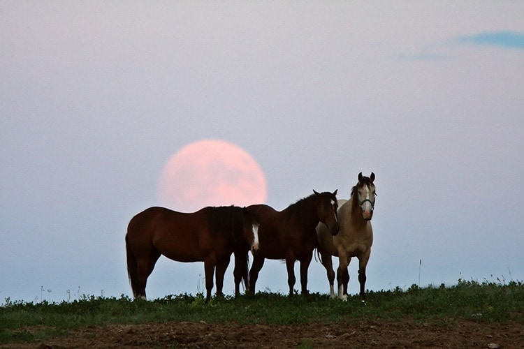 Does The Moon Phase Affect Horses Colic Risk The Horse