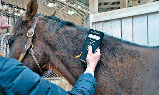 Microchipping Your Horse