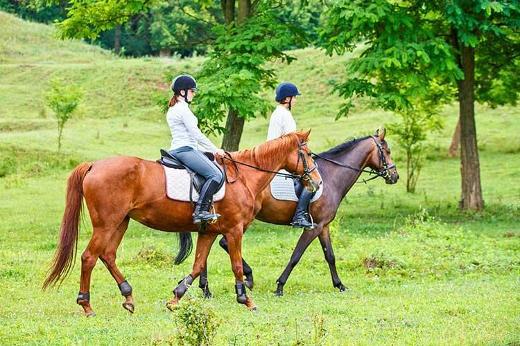 What's the Socioeconomic Status of Most Equestrian Participants?
