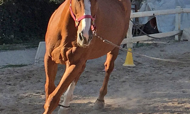 Clayton on Ground Reaction Forces, Footing, and Lameness in Horses