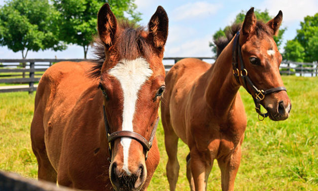 A Quick Guide to Micronutrients for Horses