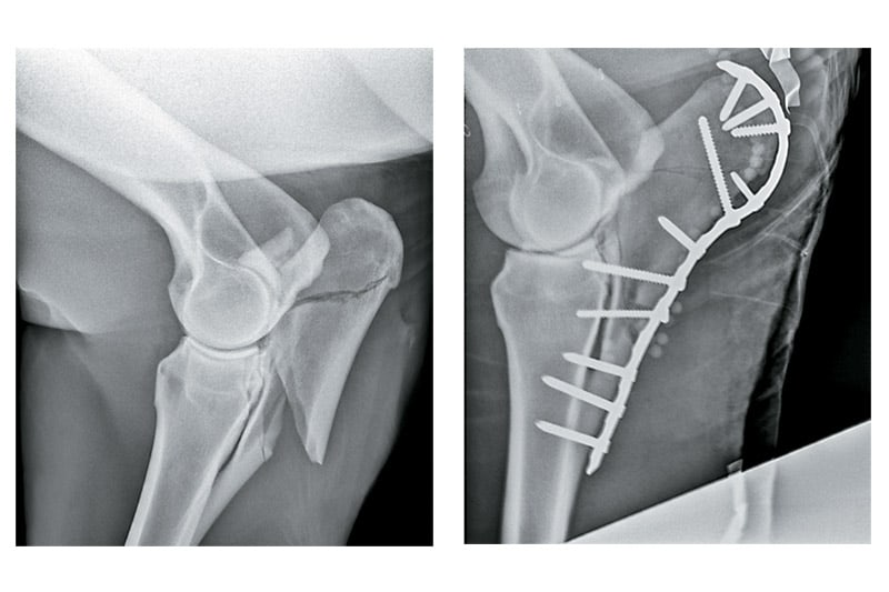 Figuring Out Limb Fractures in Horses