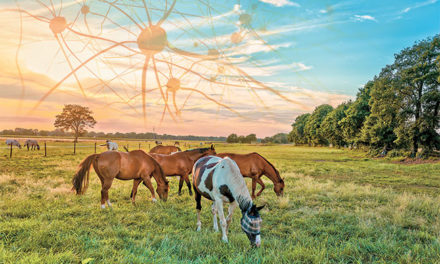 Horse Health After an Immune Challenge