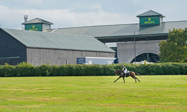 Thoroughbred Makeover: Growing by Leaps and Bounds