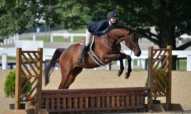Ruben's Road to the Thoroughbred Makeover