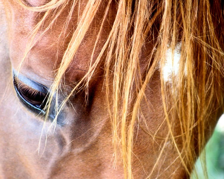 The Slippery Slope to Learned Helplessness in Horses