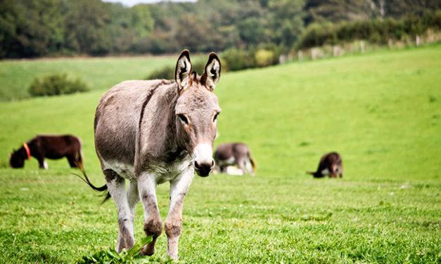 Donkey Dynamics