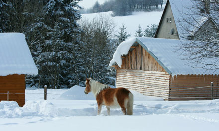 Extreme Winter Weather: Evacuate Your Horses or Shelter in Place?