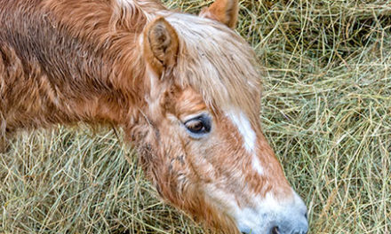 What Forage Options are Best for Senior Horses?
