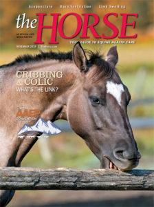The Horse: November 2019