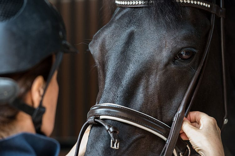 Noseband Tightness Study: The Two-Finger Rule is Just About Right