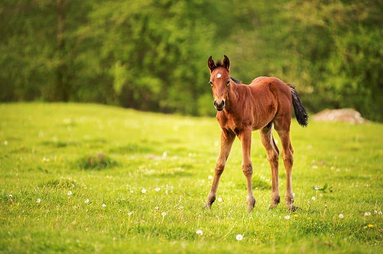 Can Poor Nutrition Stunt Foals?