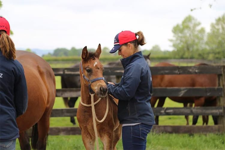 Researchers: Young Foals in Halter Training Need Frequent Days Off