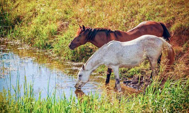 Potomac Horse Fever: A Happy Outcome