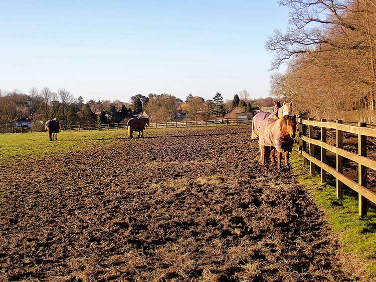 Using Drylots to Conserve Pastures and Reduce Pollution Potential