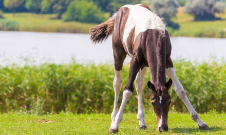 Young Horse Growth and Development