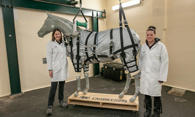 Control Your Horse's Weight and Other Ways to Prevent, Treat Laminitis