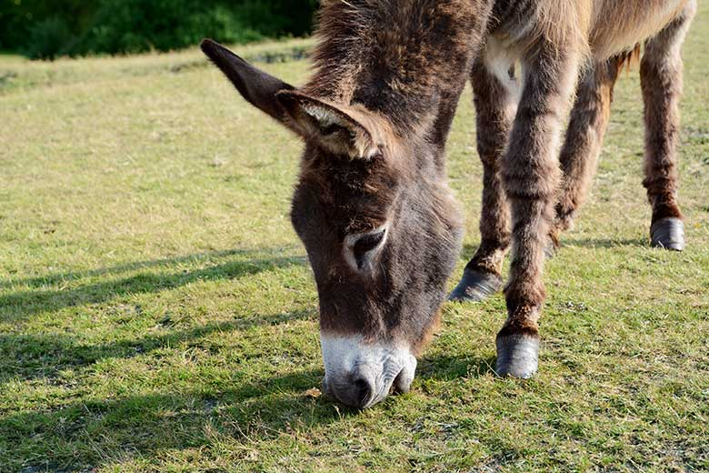 Key Concepts for Managing Donkey Feet