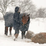 Winter's Coming: Is Your Horse Ready?