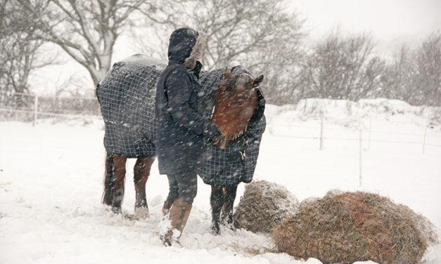 Feeding Horses To Keep Them Warm