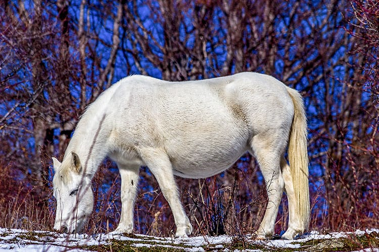 Understanding Gene Expression and Physiology During Equine Pregnancy