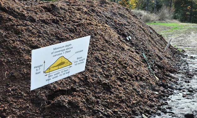 Above-Ground Burial for Horses