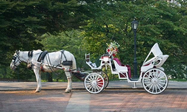 Group Wants Retirement Policy for NYC Carriage Horses
