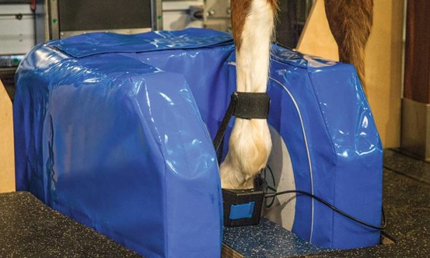 MRI for Equine Foot Lameness: The Sooner the Better