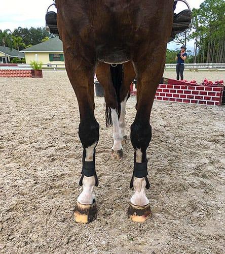 Atlarda Torakolomber Ağrı: Komplike