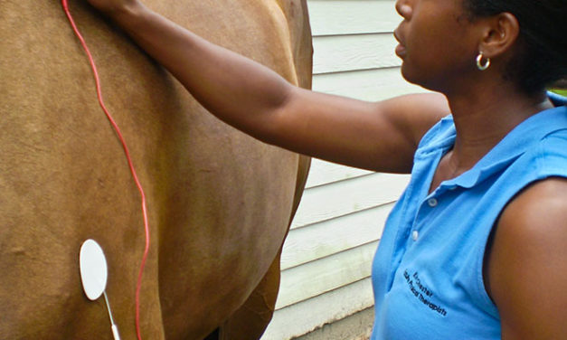 Treating Equine Soft Tissue Injuries