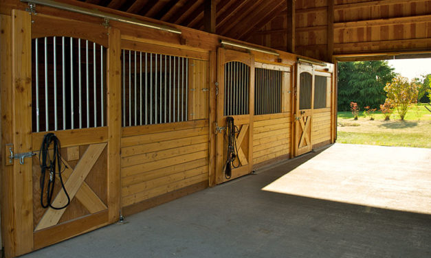 5 Common Things You Won't Find in a Horse Vet's Barn