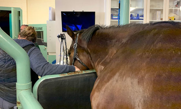 Heads or Tails? Anesthesiologist Finds New Route to Sedating Horses