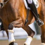 Serum Profile Matters in Blood-Based Equine Joint Treatments
