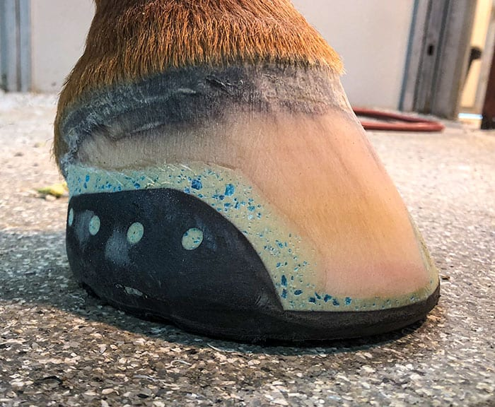 Horse Hoofwear Innovations