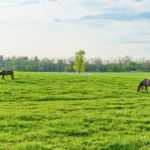 Equine Endocrinopathic Laminitis Explained